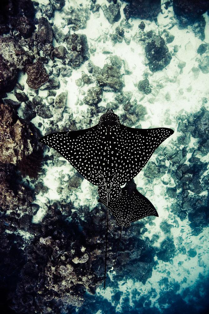 La plimbare cu rechinii, impreuna cu Michael Muller - Poza 7