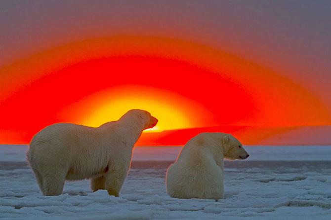 Ursi polari la apus, cu Sylvain Corder - Poza 1