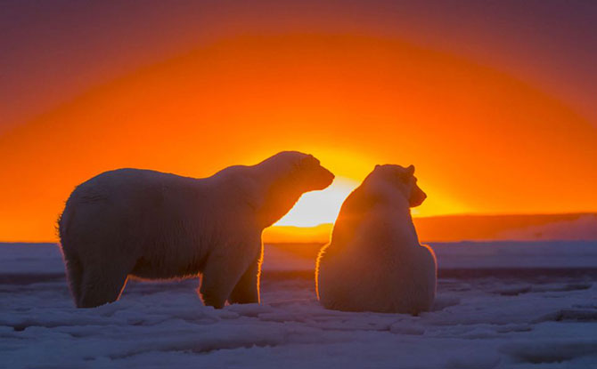 Ursi polari la apus, cu Sylvain Corder - Poza 4