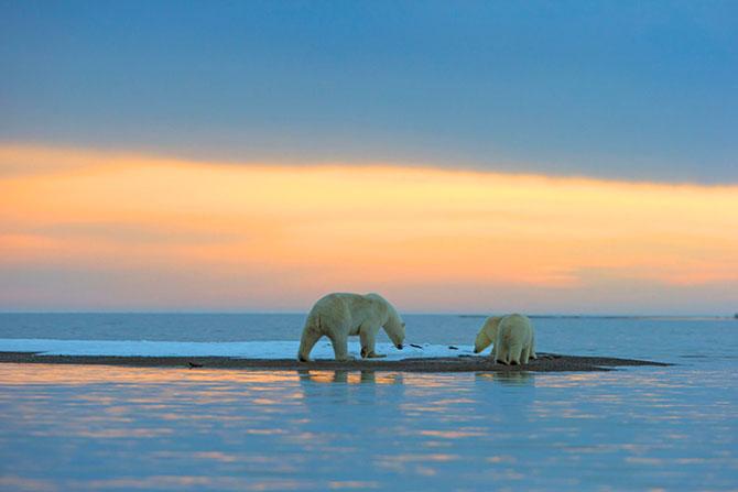 Ursi polari la apus, cu Sylvain Corder - Poza 8