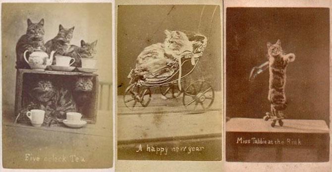 Poze cu pisici si catei de-acum un secol - Poza 2