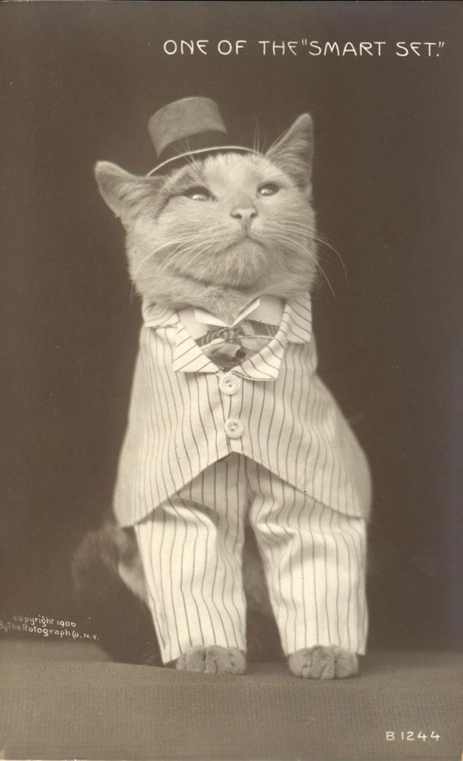 Poze cu pisici si catei de-acum un secol - Poza 4
