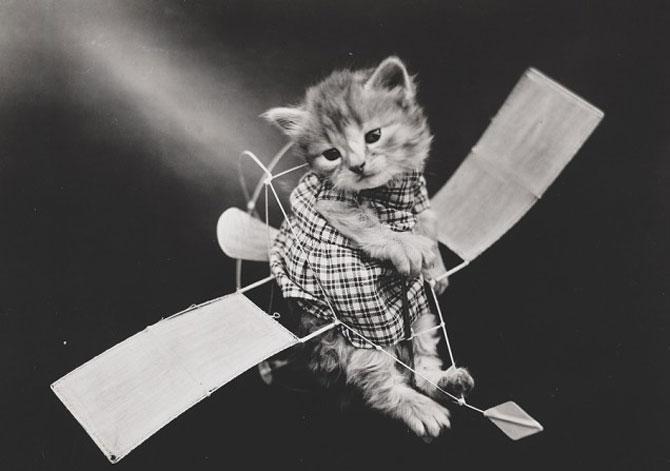 Poze cu pisici si catei de-acum un secol - Poza 9