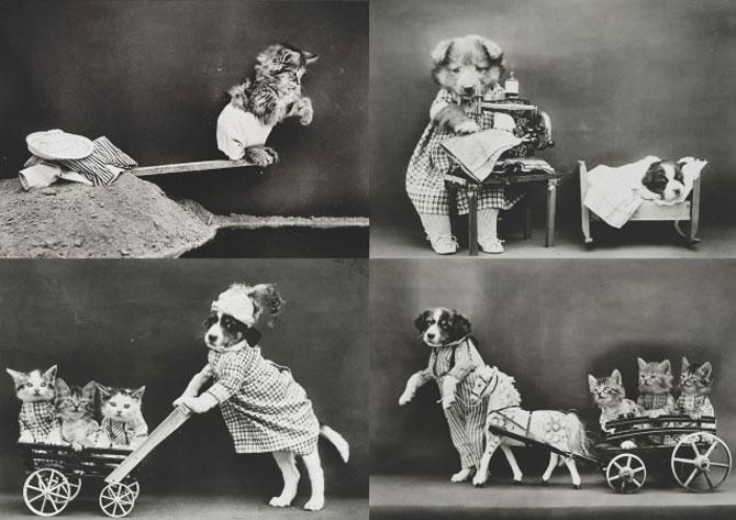 Poze cu pisici si catei de-acum un secol - Poza 12