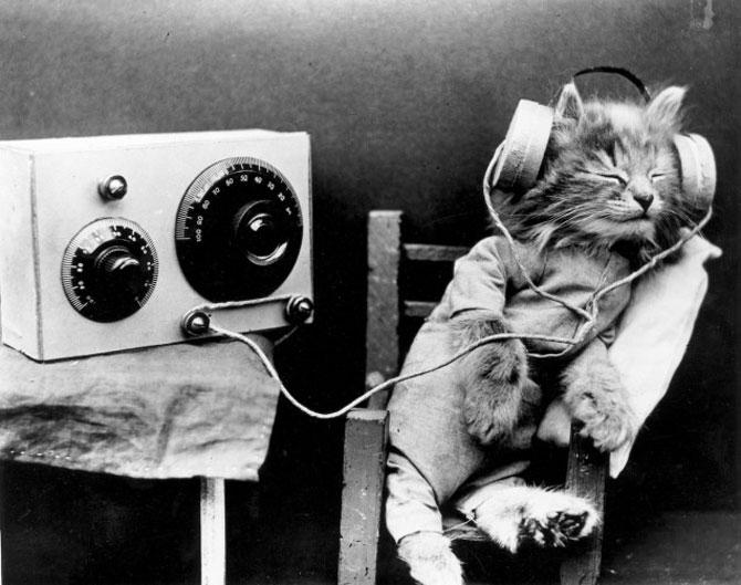 Poze cu pisici si catei de-acum un secol - Poza 14
