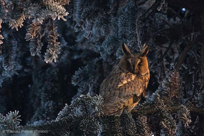 Cele mai bune fotografii din natura pe 2013 - Poza 3