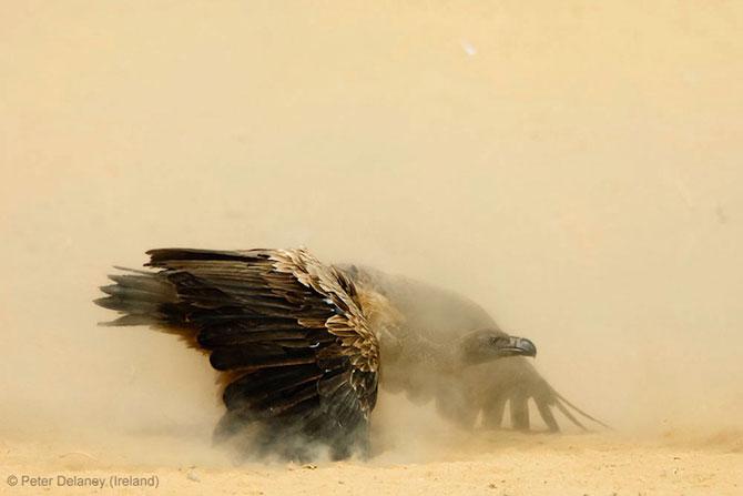 Cele mai bune fotografii din natura pe 2013 - Poza 4