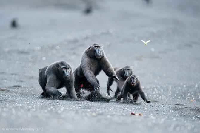 Cele mai bune fotografii din natura pe 2013 - Poza 5