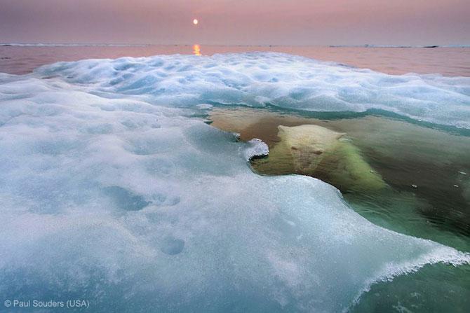 Cele mai bune fotografii din natura pe 2013 - Poza 6