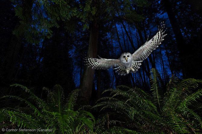 Cele mai bune fotografii din natura pe 2013 - Poza 8