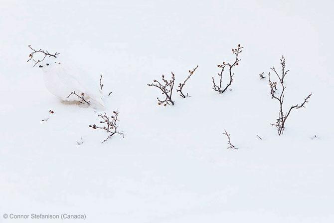 Cele mai bune fotografii din natura pe 2013 - Poza 9
