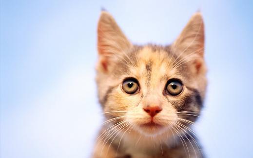 25 de wallpapere cu pisici si caini! - Poza 11