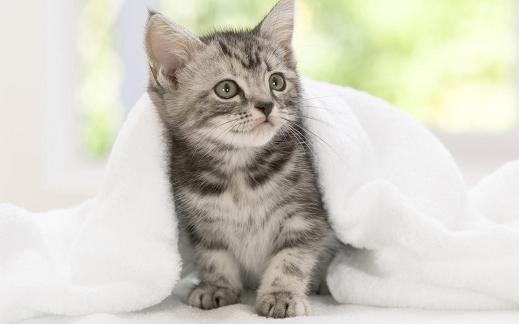 25 de wallpapere cu pisici si caini! - Poza 12