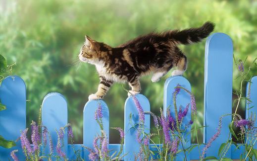 25 de wallpapere cu pisici si caini! - Poza 13