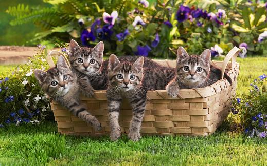 25 de wallpapere cu pisici si caini! - Poza 14