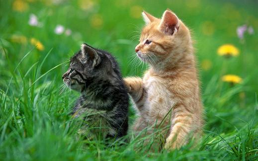 25 de wallpapere cu pisici si caini! - Poza 15