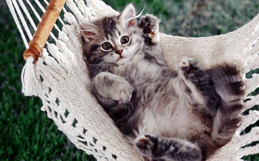 25 de wallpapere cu pisici si caini! - Poza 16