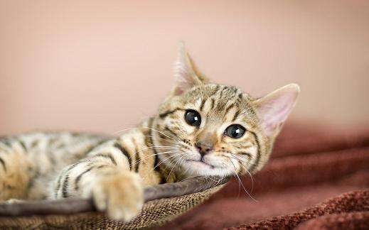 25 de wallpapere cu pisici si caini! - Poza 18