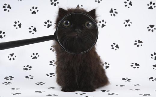 25 de wallpapere cu pisici si caini! - Poza 19