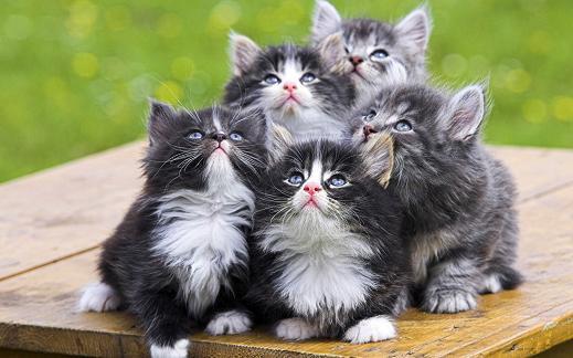 25 de wallpapere cu pisici si caini! - Poza 20