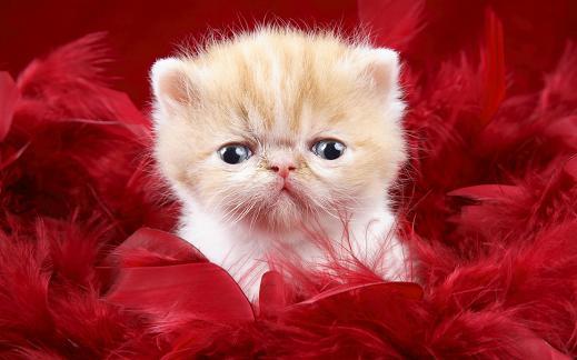 25 de wallpapere cu pisici si caini! - Poza 21
