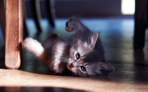 25 de wallpapere cu pisici si caini! - Poza 22