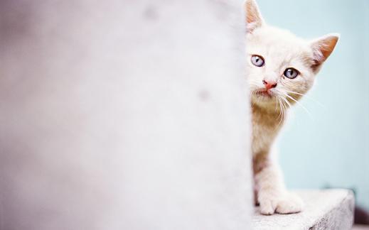 25 de wallpapere cu pisici si caini! - Poza 23