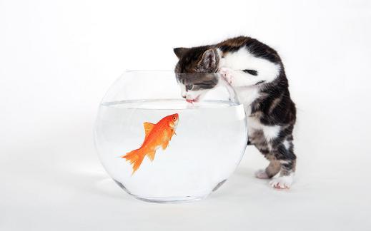 25 de wallpapere cu pisici si caini! - Poza 24