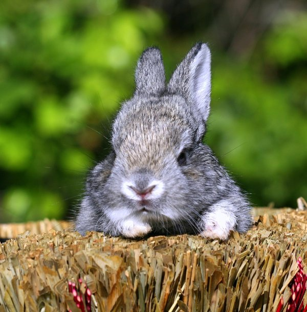 Atentie: Animale simpatice in 45 de poze! - Poza 16