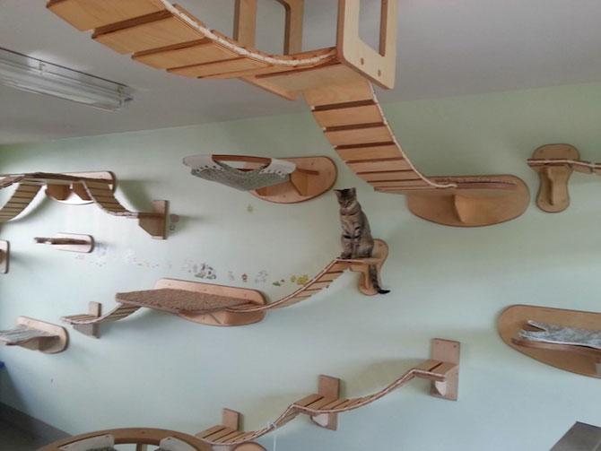 O camera de joaca numai pentru pisici - Poza 1