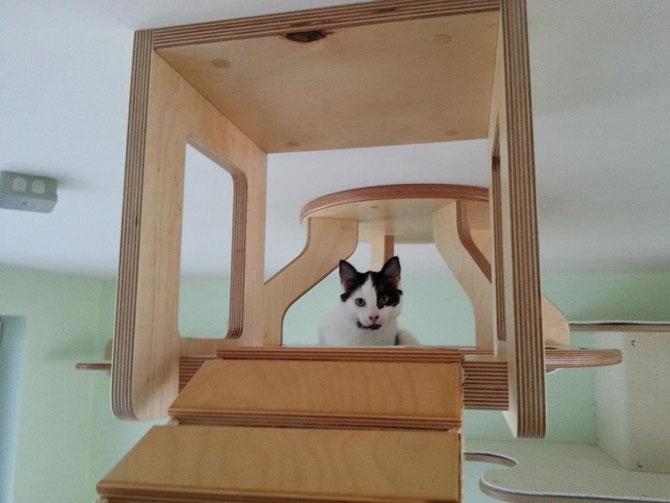 O camera de joaca numai pentru pisici - Poza 5