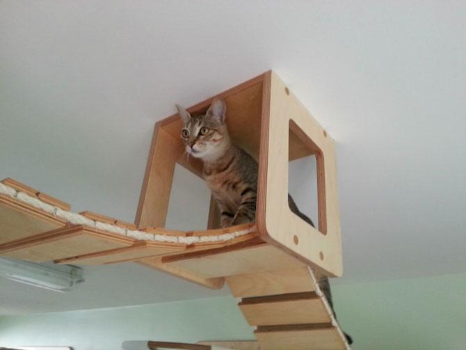 O camera de joaca numai pentru pisici - Poza 8