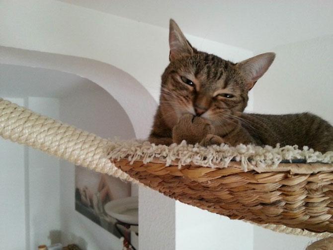 O camera de joaca numai pentru pisici - Poza 9