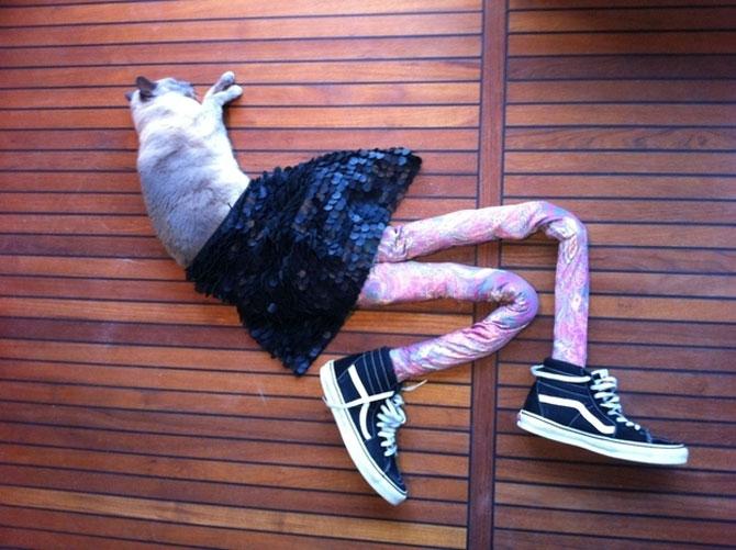 Gucci, pisica in colanti! - Poza 1