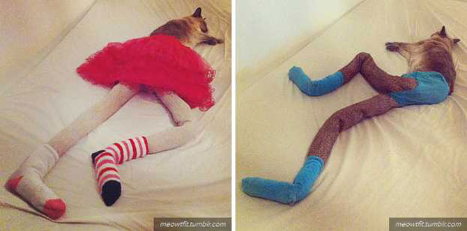 Gucci, pisica in colanti! - Poza 4