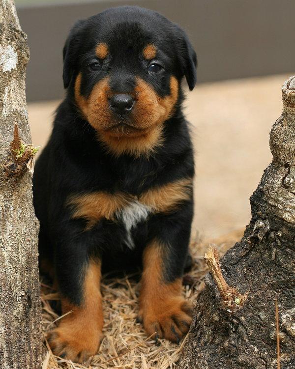 Atentie: Animale simpatice in 45 de poze! - Poza 19