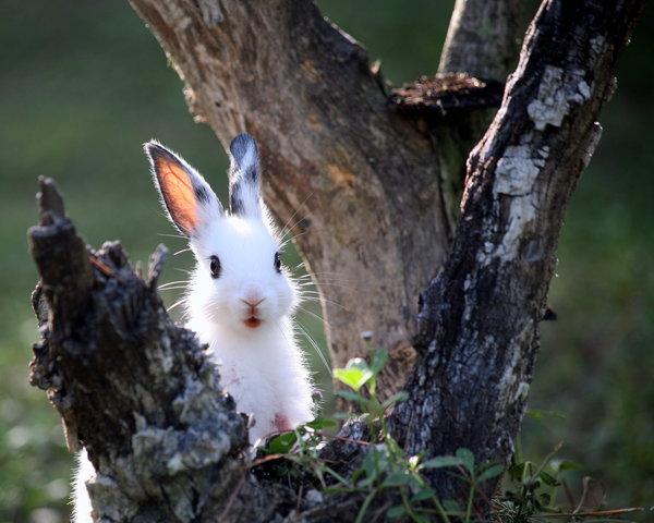 Atentie: Animale simpatice in 45 de poze! - Poza 20