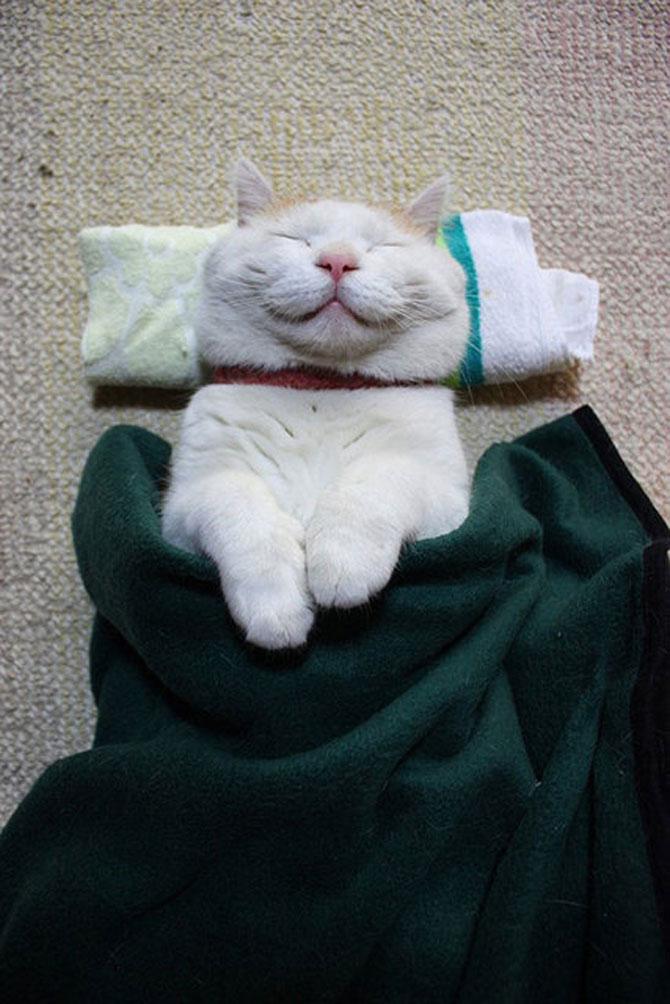 Shironeko, un maestru Zen al pisicilor - Poza 1