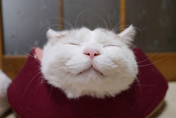 Shironeko, un maestru Zen al pisicilor - Poza 3