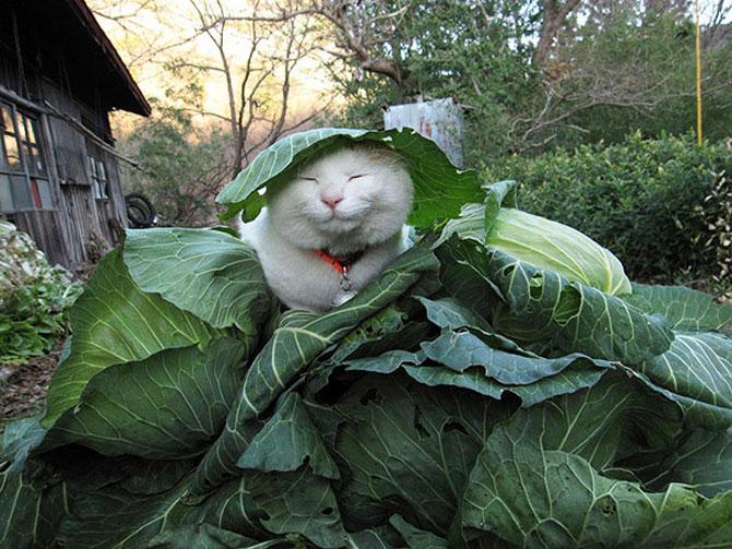 Shironeko, un maestru Zen al pisicilor - Poza 4