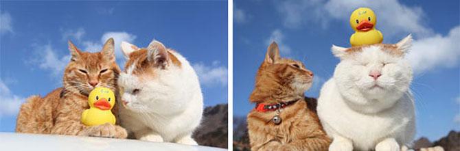 Shironeko, un maestru Zen al pisicilor - Poza 7