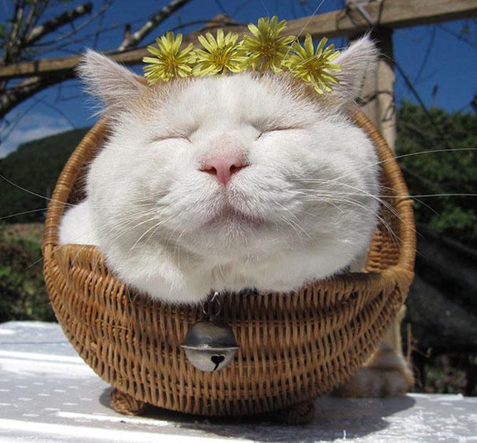 Shironeko, un maestru Zen al pisicilor - Poza 8