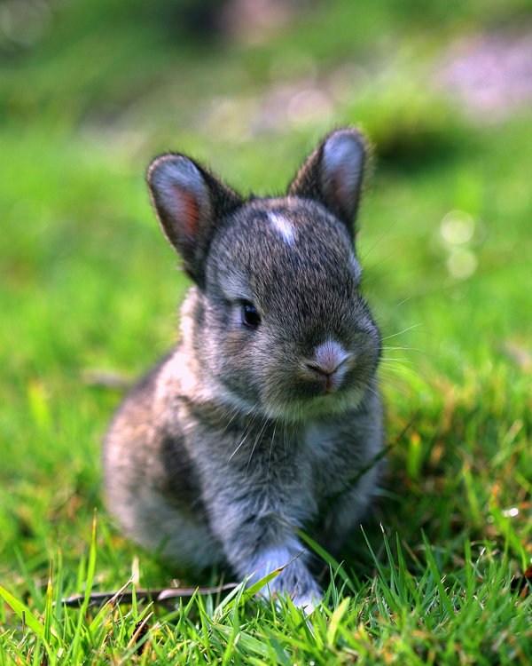 Atentie: Animale simpatice in 45 de poze! - Poza 21