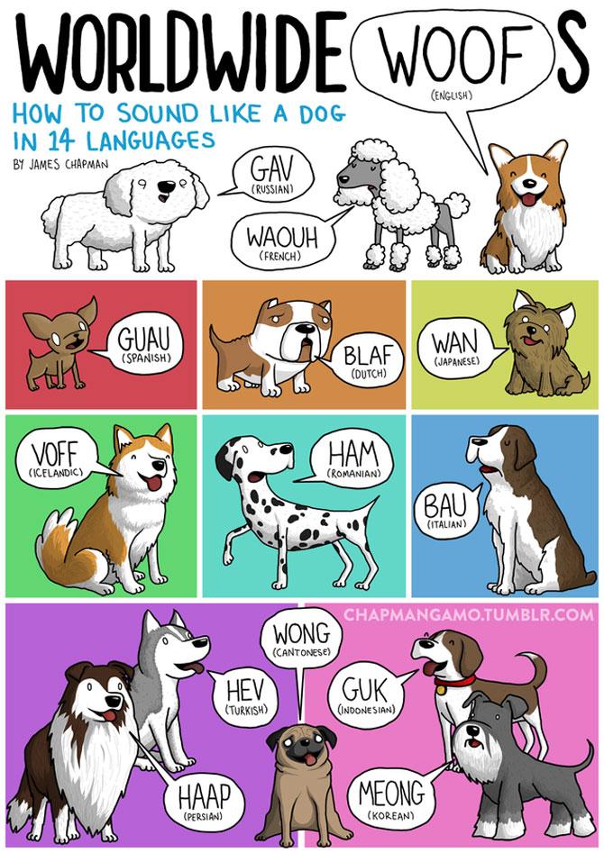 Cum suna animalele in diferite limbi? - Poza 1