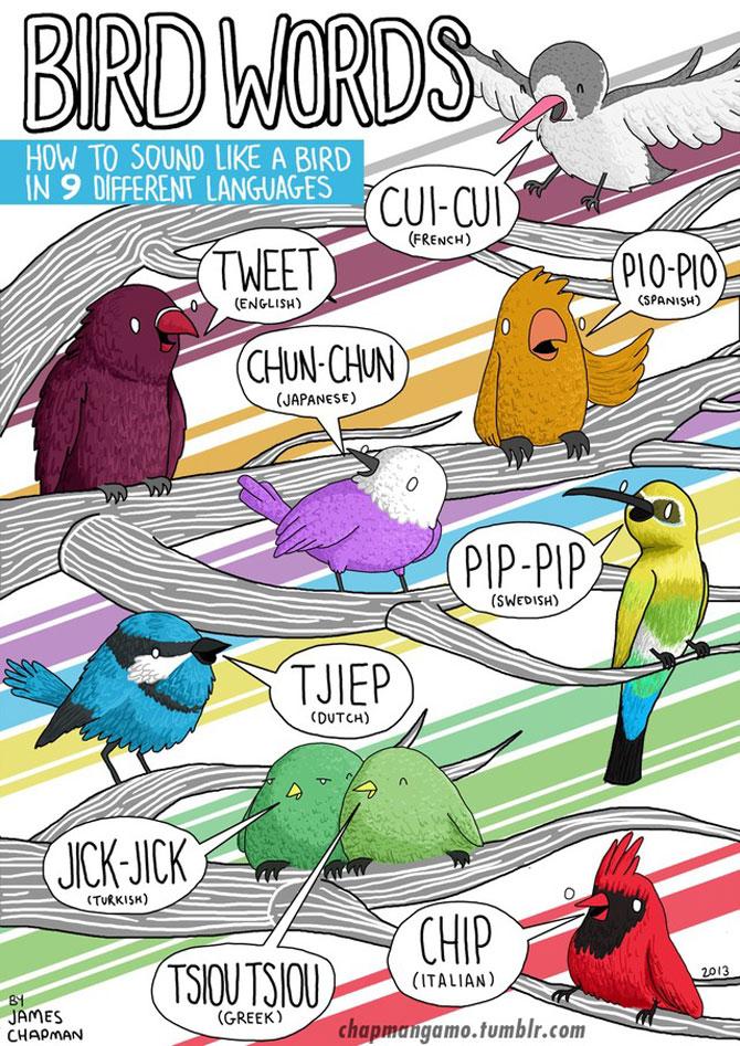 Cum suna animalele in diferite limbi? - Poza 2