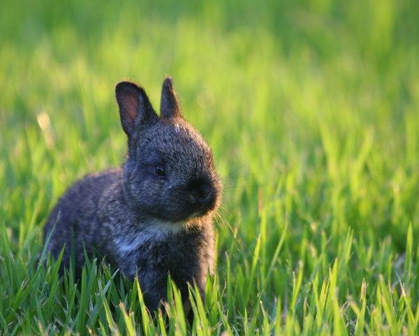 Atentie: Animale simpatice in 45 de poze! - Poza 22