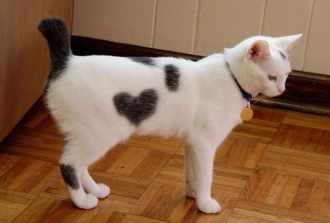 13 animalute cu inimioare - Poza 5