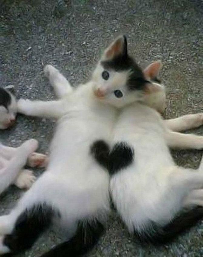 13 animalute cu inimioare - Poza 10