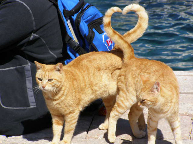 13 animalute cu inimioare - Poza 12