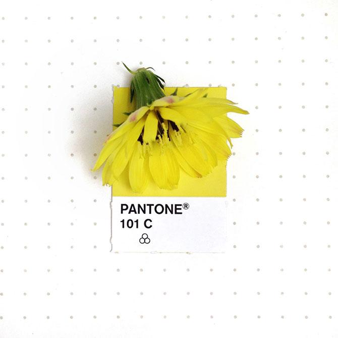 Perechi de culori Pantone si obiecte mici - Poza 7
